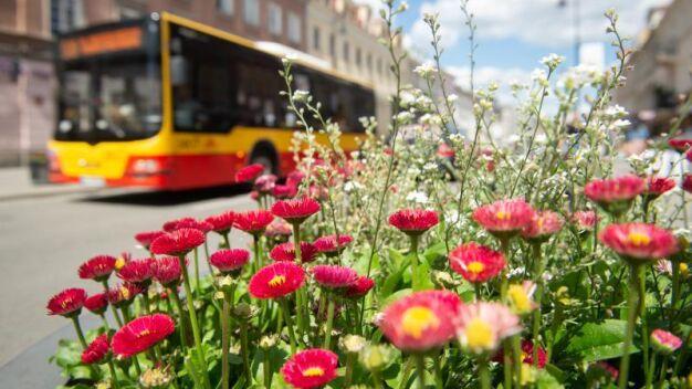 Zawieszone kursy na wakacje. Mniej autobusów i tramwajów