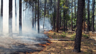 Zmiany klimatu niszczą lasy. Trzeba chronić je przed pożarami i magazynować wodę