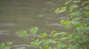 W Czechowicach-Dziedzicach rzeka Biała przekroczyła stan ostrzegawczy